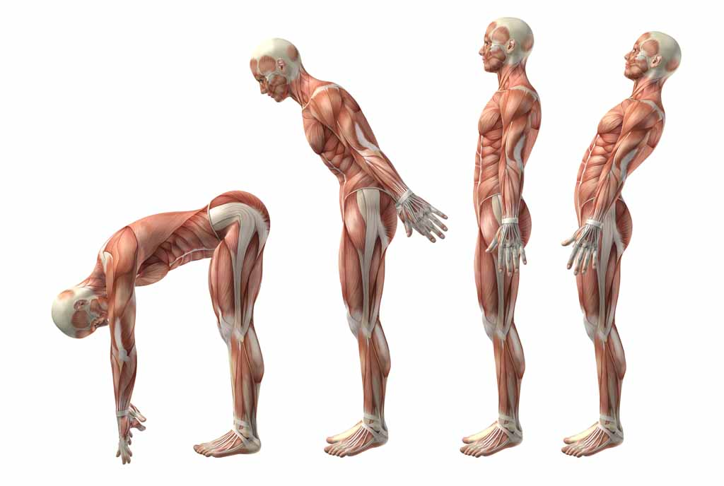 Joint Articulations and Movements - ExRx